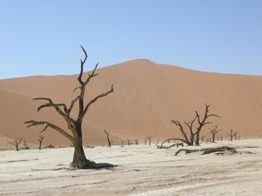 Dune01_1103