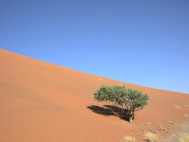 Dune05_1103