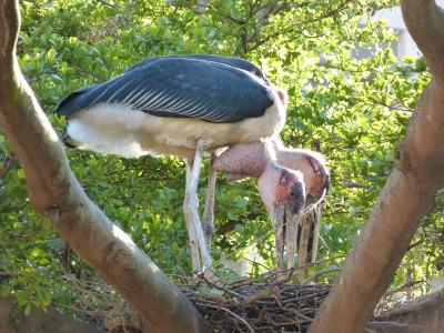 Stork1112223