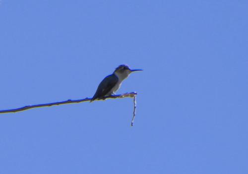Bird1708182