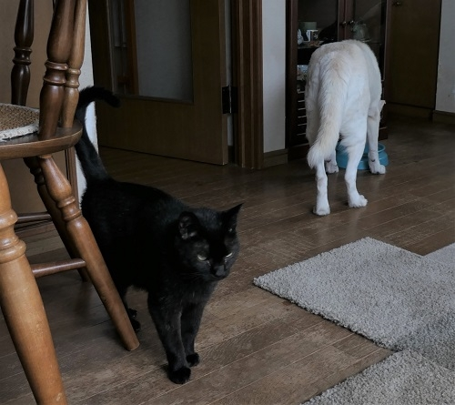 Catdog190905