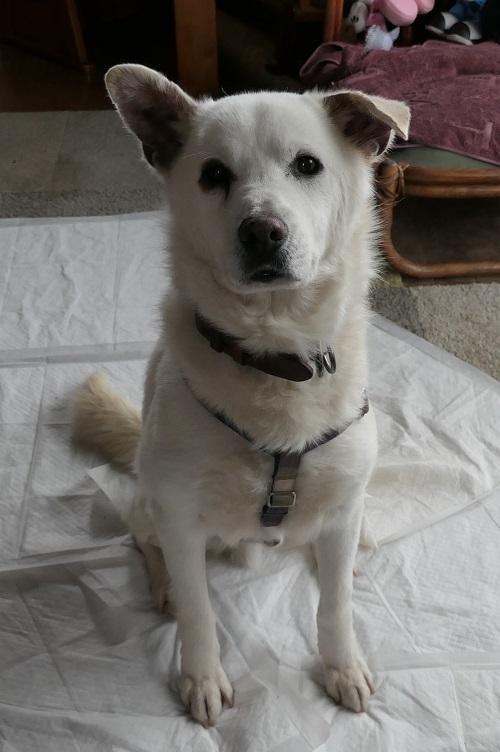 Dog1904301
