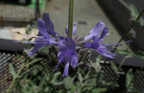 Flower1905161