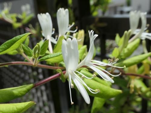 Flower1905162