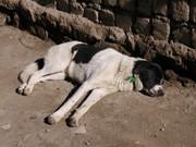Onedog