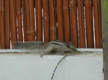Squirrel0123