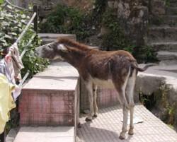 Donkey0320_2