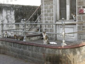 Mumbaicats0414