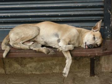 Mumbaidog0414