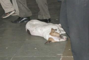 Subwaydog0414