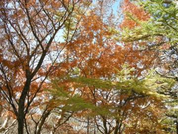 Treecolors1020