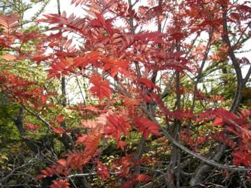 Treecolors10202
