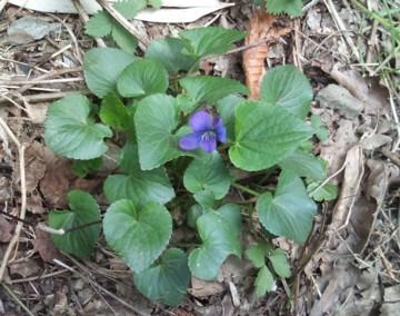 Violet04121