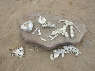 Bones0713