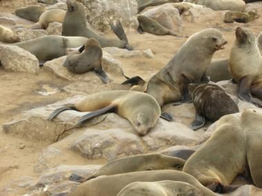 Seals0713