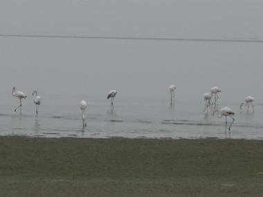 Flamingo1024_380x285