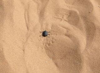 Bug101103