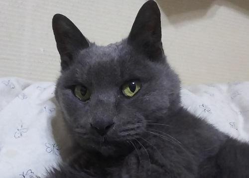 Cat1803031
