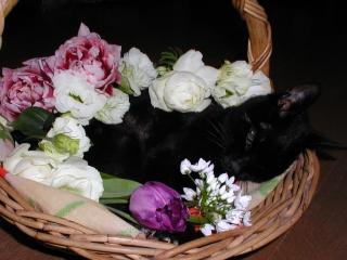 黒猫、永眠いたしました: オフィ...