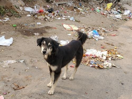 Dog200418