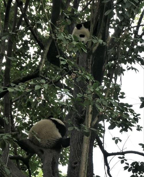 Panda1912073