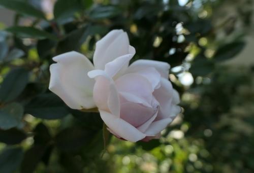 Rose2004292